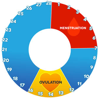 ovulation date calcul